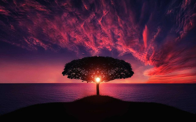západ slunce za stromem