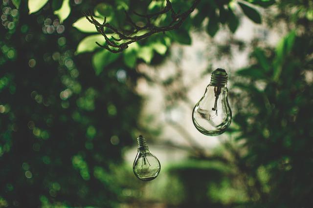 Žárovky v přírodě.jpg